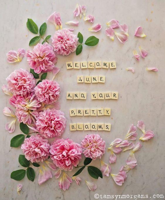 Welcome .... June Bd18de0abec3dd39458b4aed8d2f9a43
