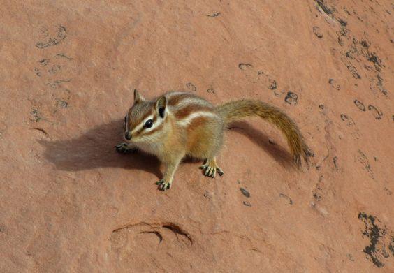 striped_squirrel_by_olgakofti-d4vgkrm.jpg 900×625 pixels