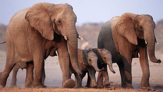 Cancer resistance in elephants - http://www.women-info.com/en/cancer-resistance-in-elephants/