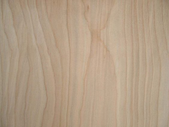 Modern birch wood grain texture with 1280 for Berch wood