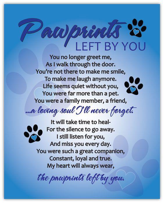 Pin On Pet Passings