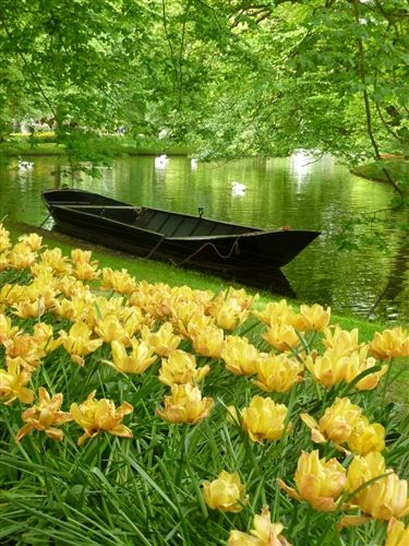 Keukenhof Gardens, Netherlands.   - Explore the World with Travel Nerd Nici, one Country at a Time. http://TravelNerdNici.com
