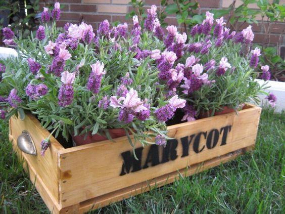 Florecitas pa la terraza o jardin