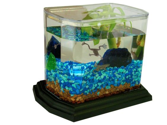 how to make a frog habitat in a fish tank