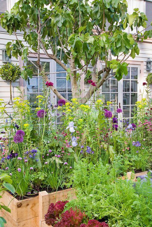 Edible landscaping Backyard Vegetable & Flower Garden | Plant & Flower Stock Photography: GardenPhotos.com