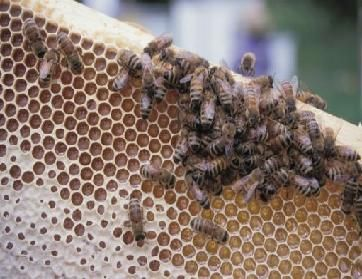 Beeswax Uses Recipies & Facts