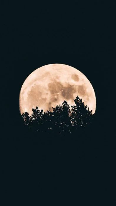 Fondo de pantalla luna llena entre árboles
