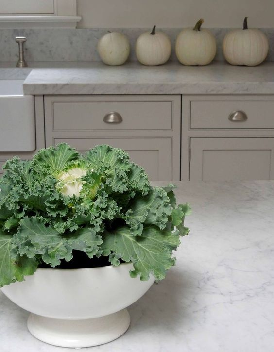 Tone on Tone  ornamental Kale and white pumpkins♥♥♥: