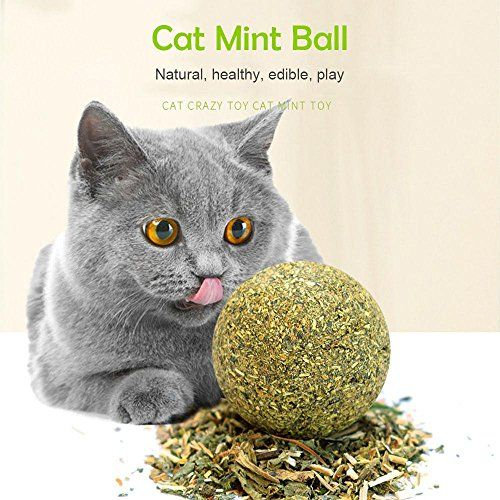 Pawaca Catnip Toys Cat Ball Toys Entertainment Interactive Play For Healthy Teeth Oral Care And Helps With Bad Breath Andnursing Stomach Click Image T Koshki