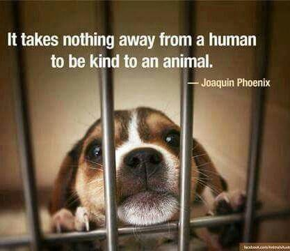 How should animal be treated