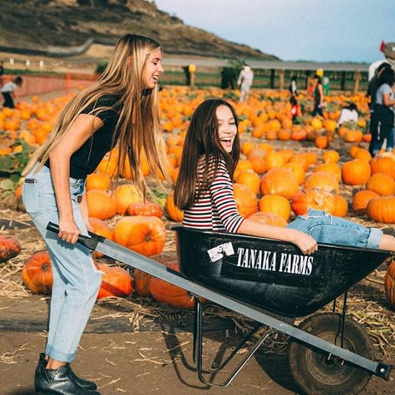 Where To Find A Pumpkin Farm In The Uk To Pick Your Own Pumpkin