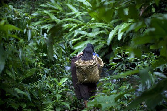 Meisjes die bij de Ashaninka-indianen, Pichari, een stadje in het centrum van Peru (in een district met dezelfde naam), ligt aan de rivier de Apurímac en in een vallei waar volgens de Verenigde Naties 56 procent van de cocabladeren van het land te vinden zijn