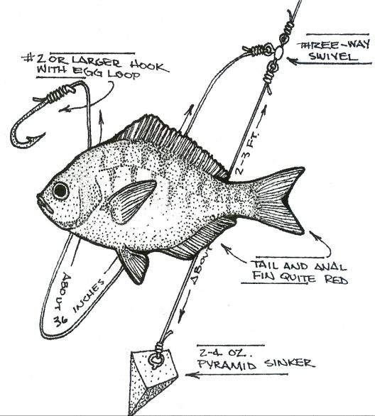Surf washington and the o 39 jays on pinterest for White perch fishing rigs