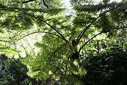 Real Jardín Botánico de Melbourne -