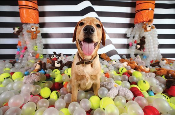 Pin By Kong Company On Kong In The News In 2020 Love Pet Your Pet Pets