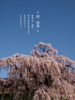 ピンテレストのカテゴリー分けがいまいちわからないので、for the homeへいれた。  福島原発事故立地県に住んでいるから、地元の滝桜を脱原発ポスターにしてブログを書いているのでご紹介。