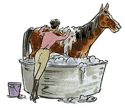 Horse Grooming: Horse Bathing & Cleaning Tips