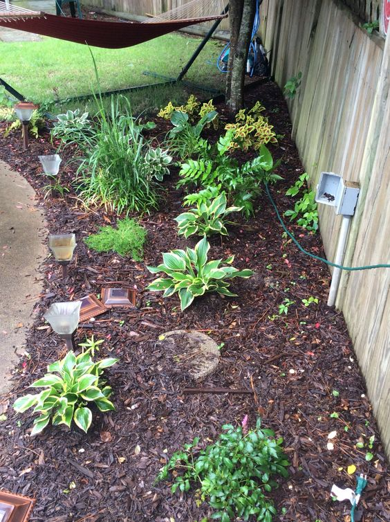 Summer 2014 plants, hosts garden