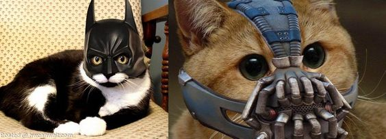 The new Catman movie..