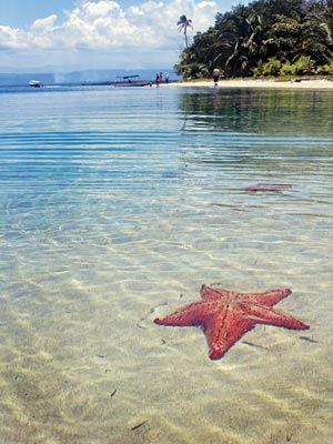 Mejores playas del mundo - Playa de las estrellas (Panamá) #travel #viaje #playa