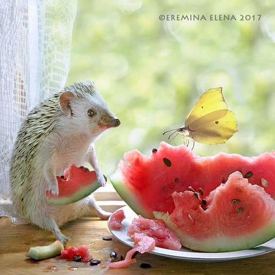 Just a good day by Elena Eremina