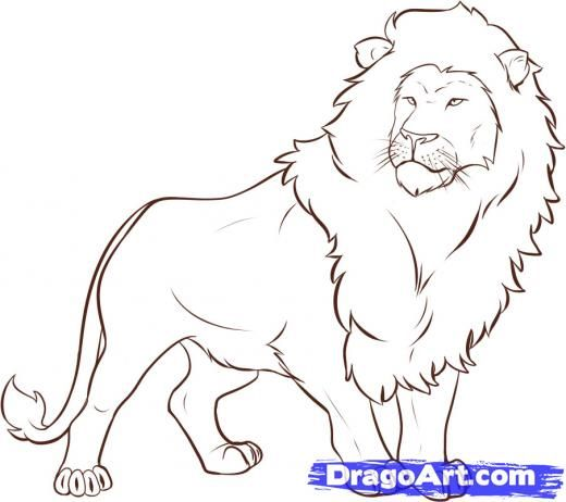 how to draw a simple lion