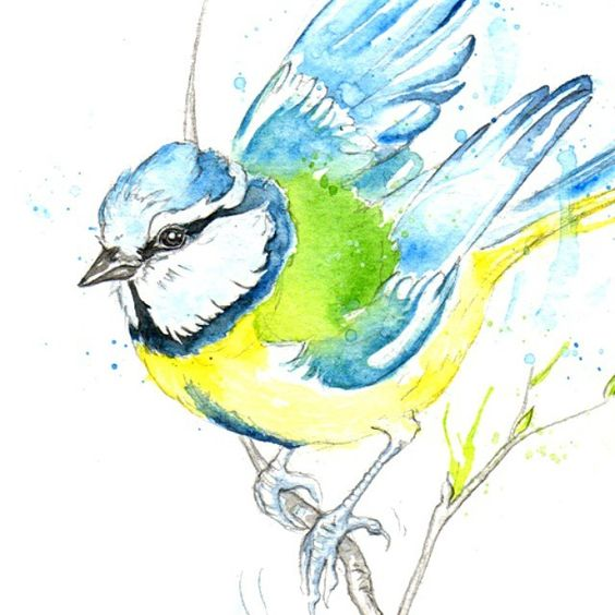 Blue bird. #bluetit #illustration #watercolor #painting #spring #drawing #artistsofig #amyhollidayillustration #birds #birdart #wildlifeart #barrowinfurness #lakedistrict #Cumbria