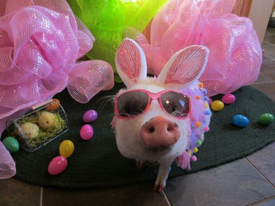 Pigs, Easter and Mini pigs on Pinterest