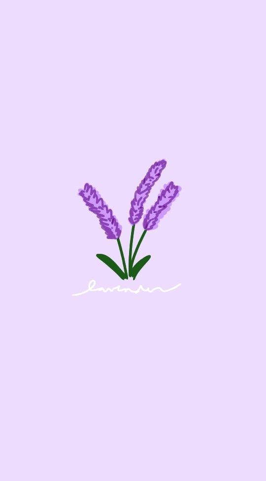Lavender Wallpaper Flower Aesthetic Purple Flowers Wallpaper Flower Wallpaper