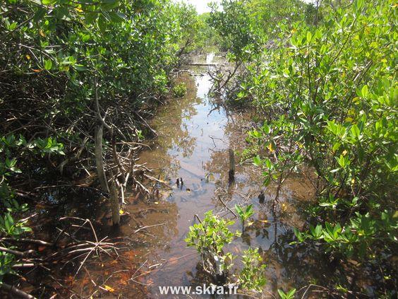 Sentier inondé dans la brousse du Belize, Caye Caulker