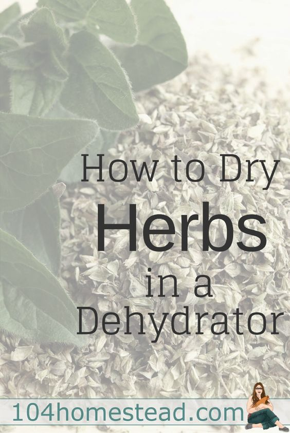 Don't let those herbs you grew go to waste! You could bring them indoors and hang them up to dry, but it's easier and faster to do it with a dehydrator. Learn how to dehydrate herbs and how to store them in this helpful article.