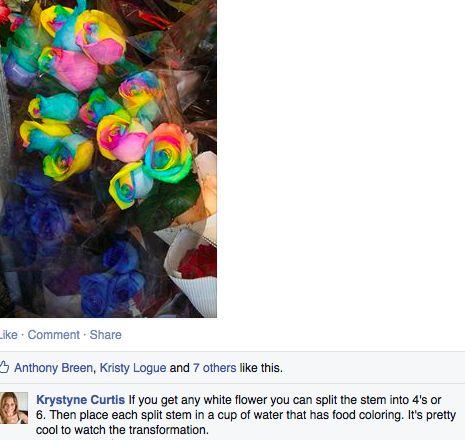 rainbow dyed flowers