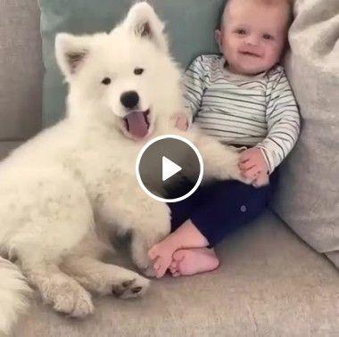 Amizade verdadeira entre cão e bebê