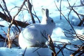 ik hou van bunny's en ze leven zich lekker uit in de strenge winter! <3