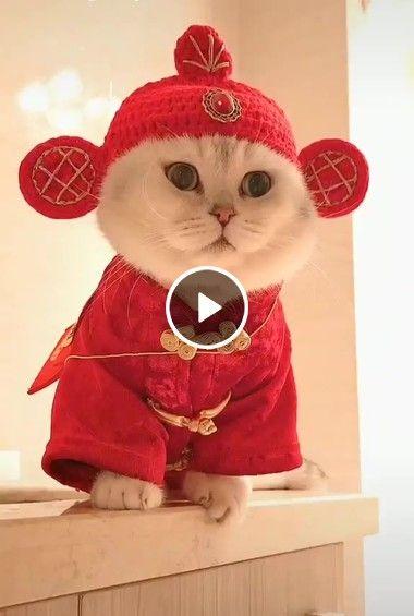 Na china Os Gatos São Assim