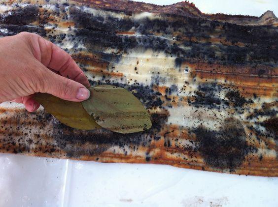 2ndhandpaper: Rust Printing with Pat Vivod