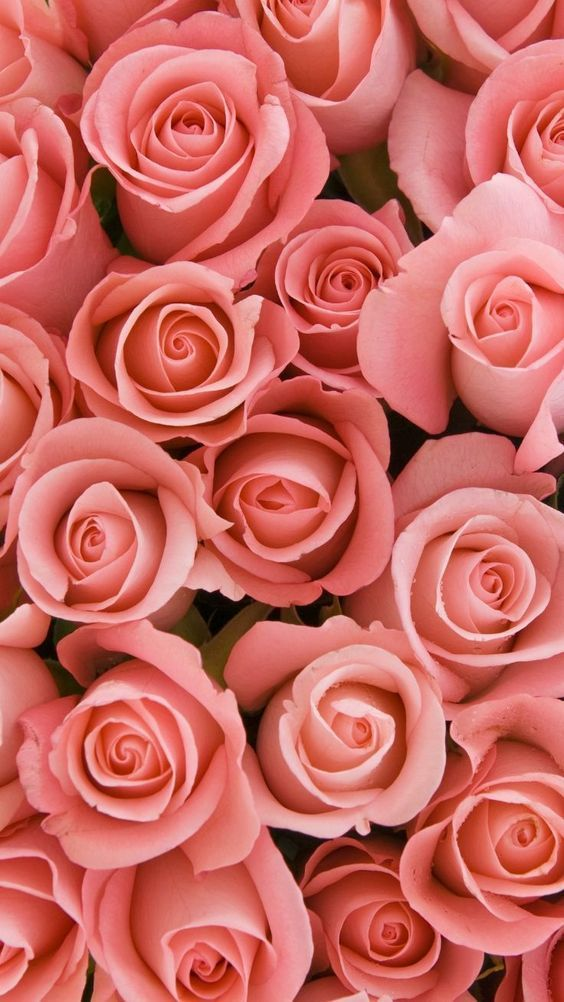 45 Beautiful Roses Wallpaper Backgrounds For Iphone Floral Wallpaper Iphone Rose Gold Wallpaper Rose Wallpaper Beautiful rose gold roses wallpaper for