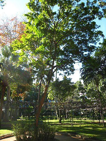 florestas brasileiras - Pesquisa Google