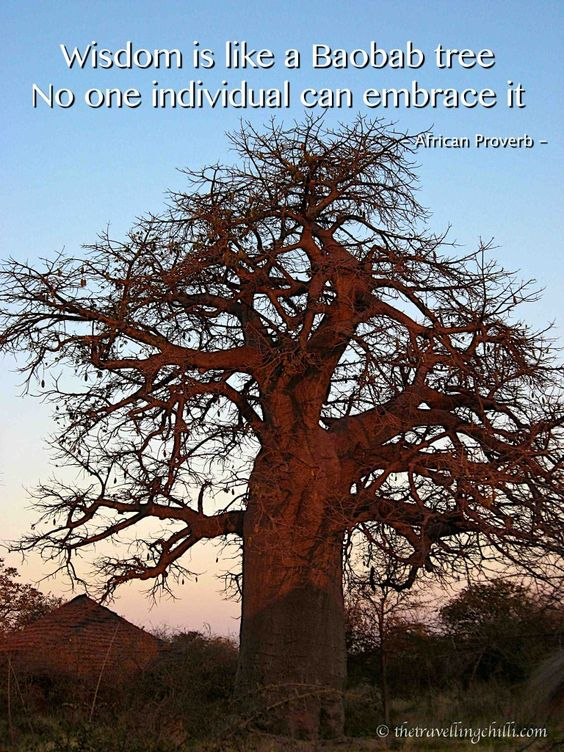 The Baobab – A tree of mysteries #africa #inspirationalquotes