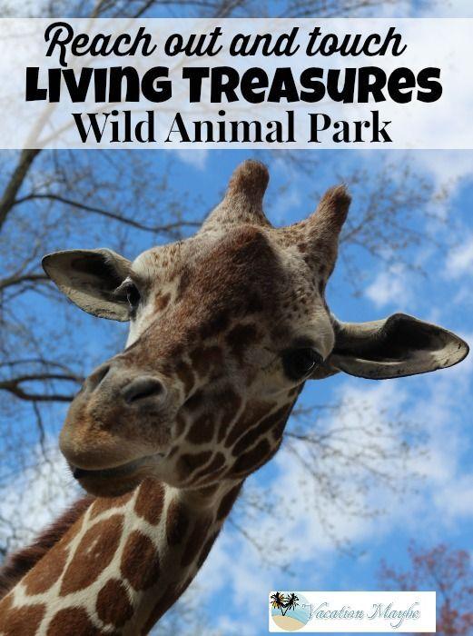 Living Treasures Wild Animal Park - vacationmaybe.com