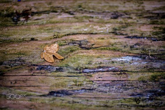leaf wood de SCDevonPhotography