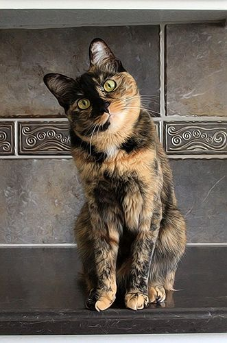 """Maddie tortoise shell cat.  Support """"Southern California Cat Adoption Tails"""" www.catadoptiontails.org."""