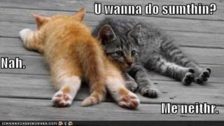 Vc quer fazer alguma coisa?  Não. Nem eu. Lazy kittens