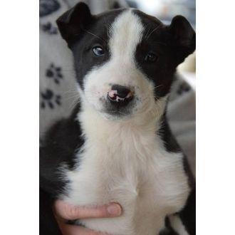 Wilson   Adopt A Golden Knoxville - Glastonbury CT   Glastonbury, Connecticut   Pets.Overstock.com