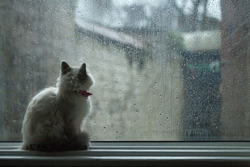 mel-cat:  Rainy Day Blues by superpolio