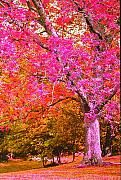 Fuschia Tree Print by Nadine Rippelmeyer