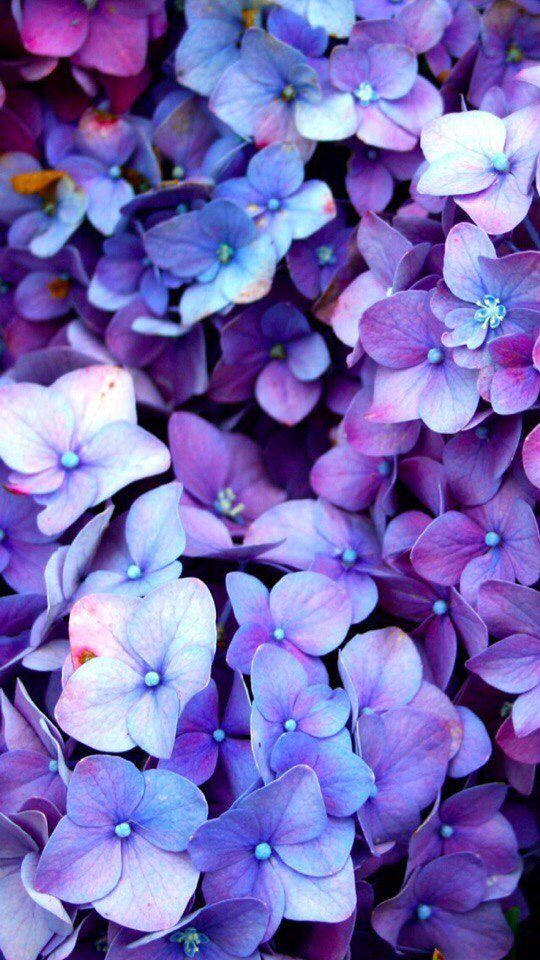 A Comprehensive Overview On Home Decoration 2020 Purple Flowers Wallpaper Flower Wallpaper Hydrangea Wallpaper