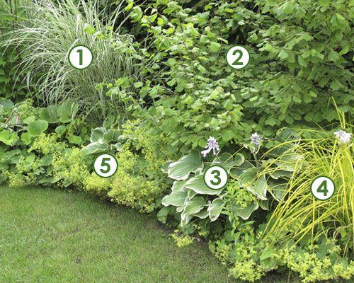 Massif haut mi ombre et au frais sc nes de jardins for Amenagement jardin anglais