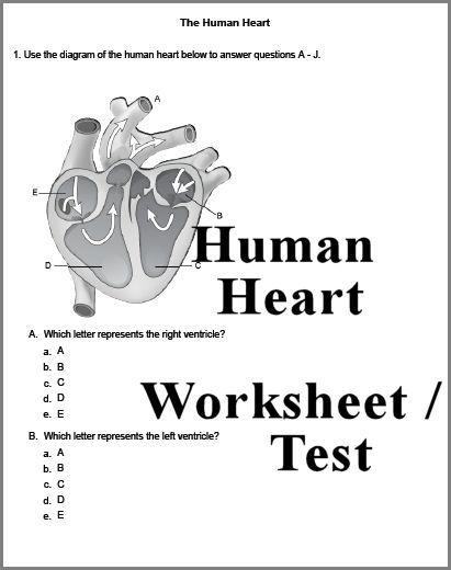 Worksheet Homeschool Science Worksheets homeschool biology and science worksheets on pinterest human heart 3 page worksheet or test answer key can also be downloaded