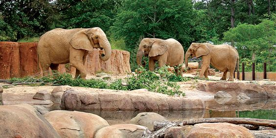 Zoos Columbia South Carolina And Columbia On Pinterest